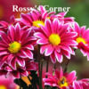 rossys_corner